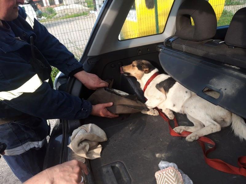 На Стрийщині рятувальники визволили собаку з бетонної пастки, фото-1